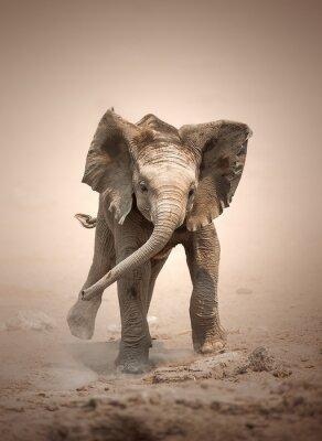 Poster Elefantenbaby mock Lade
