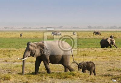 Elefantenfamilie auf der afrikanischen Savanne