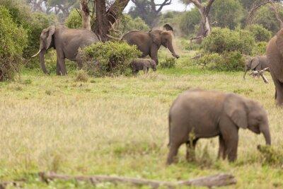 Poster Elefantenfamilie in Kenia