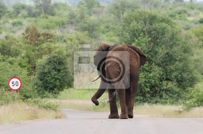 Elefantengeschwindigkeit
