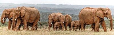Poster Elefantenherde