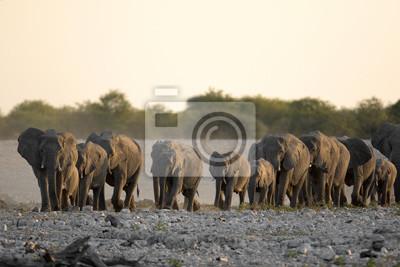 Elefantenherde geht zu einem Wasserloch.