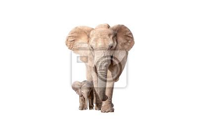 Elefantenkalb neben seiner Mutter isoliert auf weiß