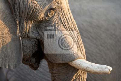 Elefantenstier am Wasserloch