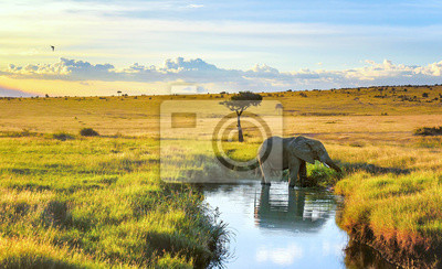 Poster Elepant, der unten im Wasser im Masai Mara-Erholungsort, Kenia abkühlt