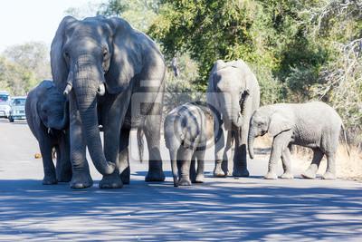 Elephant Familie