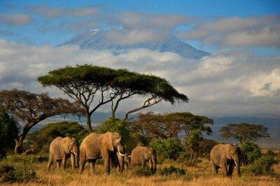 Poster Elephant Familie vor Mt . Kilimanjaro