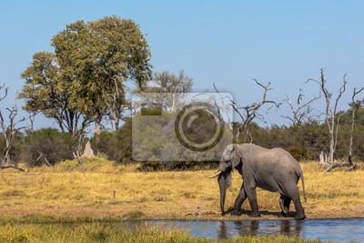 Elephant herum Chobe River im Chobe National Park, Botsuana, Afrika
