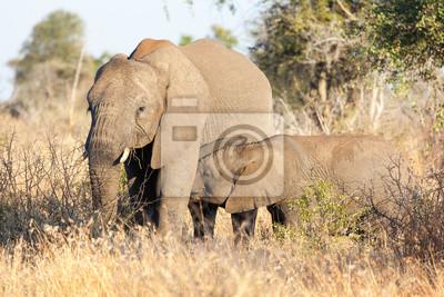 Elephant Kuh und Kalb