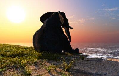 Elephant on the beach.