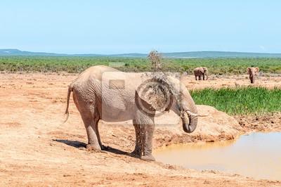 Elephant sprüht es selbst mit schlammigem Wasser