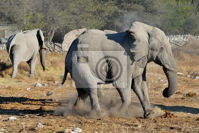 Elephant Streit, Etosha Nationalpark, Namibia