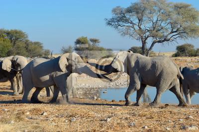 Elephant streiten, Etosha National Park, Namibia