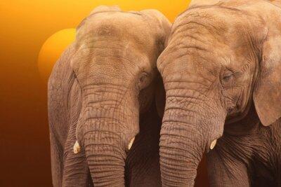 Poster Elephants Sonnenaufgang. Paare Elefanten gemeinsam bei Sonnenaufgang.