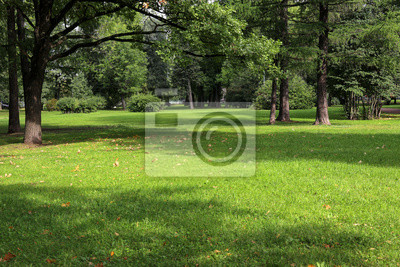 Poster empty city green park with lawn tall trees and trimmed grass with fallen leaves on an early sunny warm morning