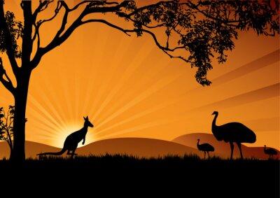 Poster Emu Känguruh Sonnenuntergang