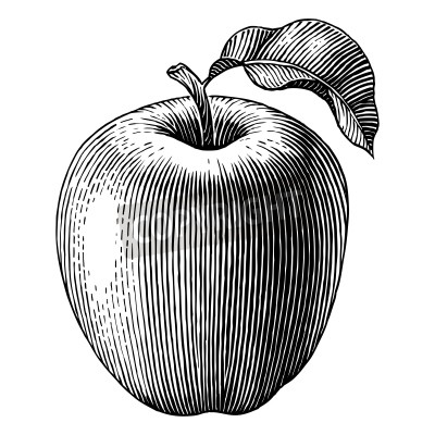 Poster Engraved illustration of an apple  Vector