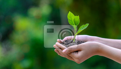 Poster environment Earth Day In the hands of trees growing seedlings. Bokeh green Background Female hand holding tree on nature field grass Forest conservation concept