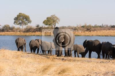 Erwachsener Elefant steht Wache vor Fluss