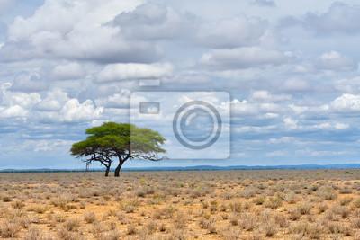 Etosha, Namibia, Afrika