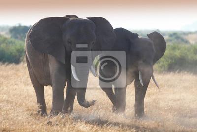 Familie Elefanten auf afrikanischen Savanne in nebligen staubigen Lichter