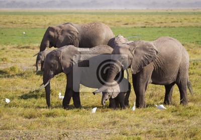 Familie Elefanten im Amboseli Nationalpark Kenia