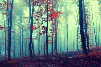 Poster Fantasie vintage herbstlichen Wald