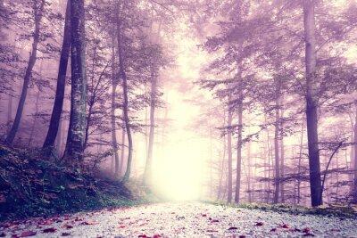 Poster Fantasy lila Farbe nebligen Waldweg. Traumhafte Märchen Farbe Waldlandschaft.