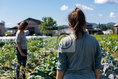 Poster Farmhands tend crops at ecological farm. Two farm helpers are seen from behind, checking the condition of crops on rural farmland against a blue sky with room for copy.
