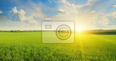 Poster Feld, Sonnenaufgang und blauer Himmel