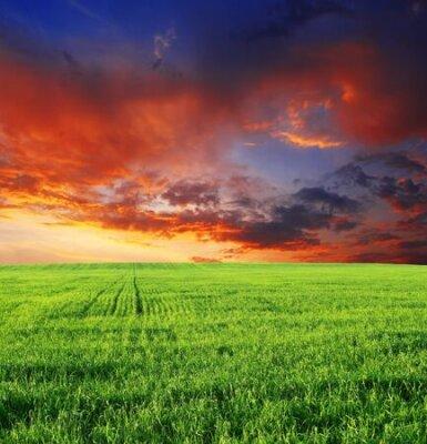 Poster Field grass sky sunset dawn clouds .