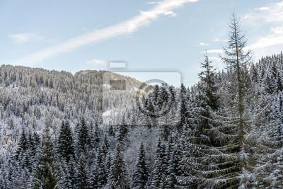 Firs Wald in den Bergen