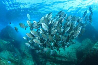 Poster Fischschule auf Unterwasser-Korallenriff im Meer Ozean