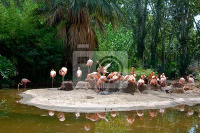Flock von Flamingos auf einer Insel.