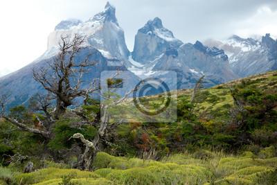 Flora von Torres del Paine, Nationalpark Chiles