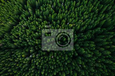 Poster Forest from above