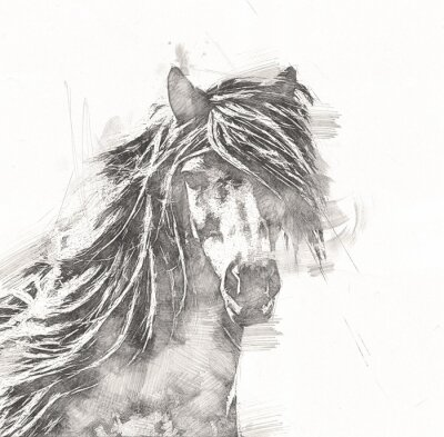 Poster freehand horse head pencil drawing