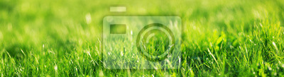 Poster Fresh green grass background