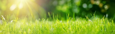 Poster Fresh green grass background in sunny summer day in park