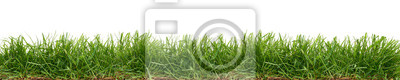Poster Fresh green grass isolated against a white background