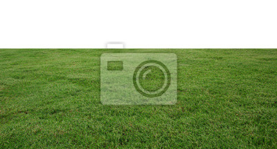 Poster fresh green grass lawn isolated on white background