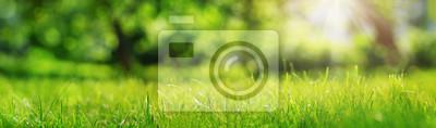 Poster Frische grüne Gras Hintergrund in sonnigen Sommertag