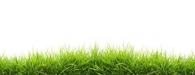 Poster frischem grünen Gras Frühjahr