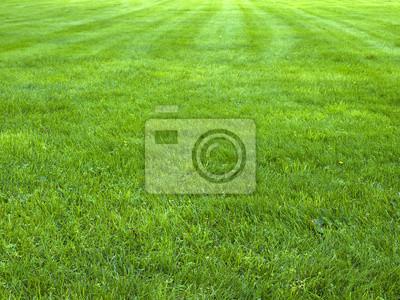 Poster Frisches Frühjahr grünes Gras, grünes Gras Textur oder Hintergrund