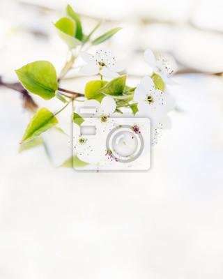 Frühling baum blüte hintergrund wandposter • poster Frühlingsblüte ...