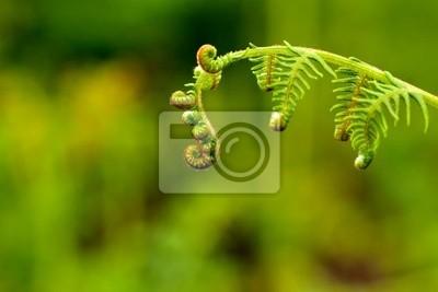 Frühling Fern leaf