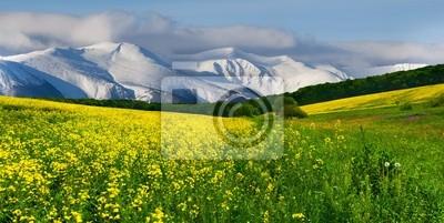 Frühling in den Ausläufern. Blühende Feld von gelben Blüten