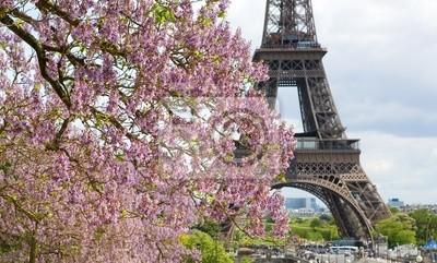 Frühling in Paris. Blühende jacarandas und der Eiffelturm