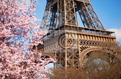 Frühling in Paris. Blühender Kirschbaum und Eiffelturm