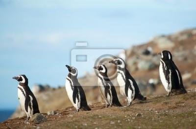 Fünf Magellan-Pinguine an der Küste